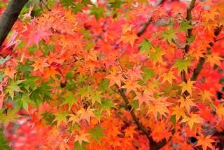 autumn-leaves_00023