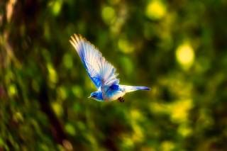 bird-2361184_640